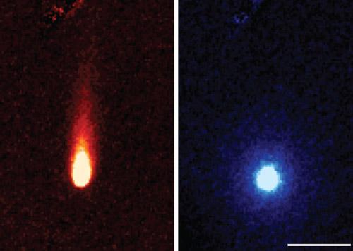 teleskopo-spritzer-komet-ison-izbruhi